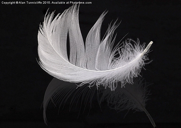 White feather Canvas print by Alan Tunnicliffe