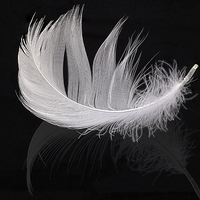 Buy canvas prints of  White feather by Alan Tunnicliffe