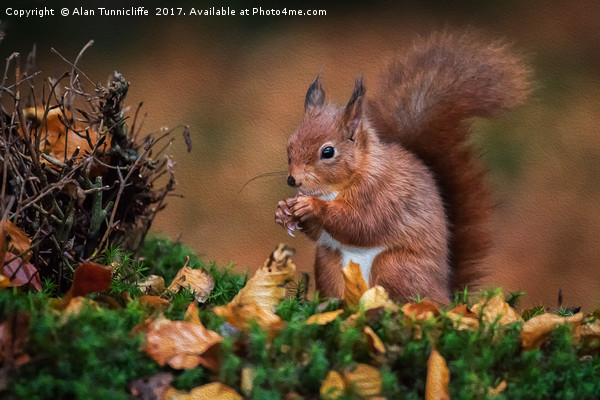 Red squirrel Canvas Print by Alan Tunnicliffe