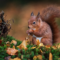 Buy canvas prints of Red squirrel by Alan Tunnicliffe