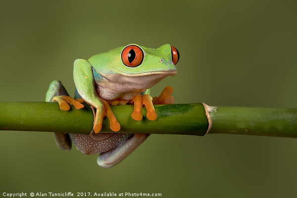 Tree frog Canvas print by Alan Tunnicliffe