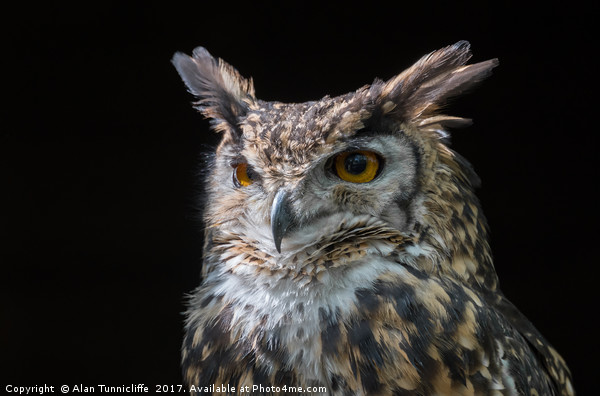 MacKinders eagle owl Canvas print by Alan Tunnicliffe