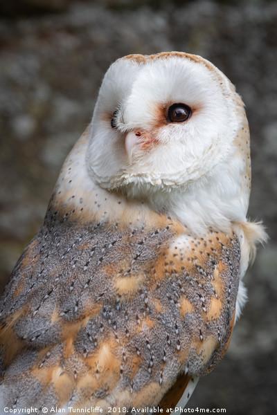 Barn owl Canvas print by Alan Tunnicliffe