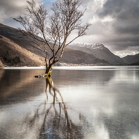 Buy canvas prints of The Lonely Tree by Christine Smart