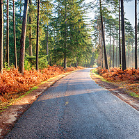 Buy canvas prints of Bolderwood Arboretum Ornamental Drive in the New F by Helen Hotson