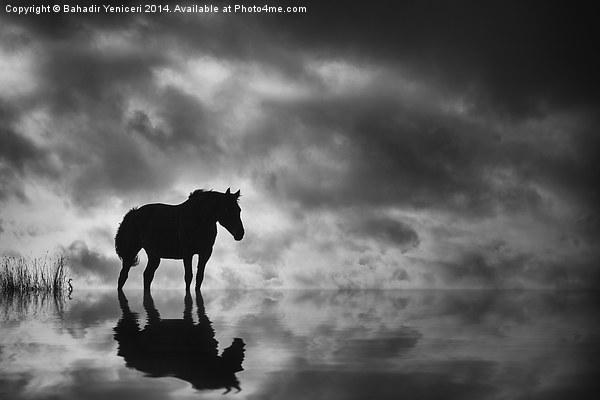 Horse Canvas print by Bahadir Yeniceri