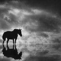 Buy canvas prints of Horse by Bahadir Yeniceri