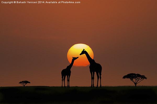 African Sunset Canvas print by Bahadir Yeniceri