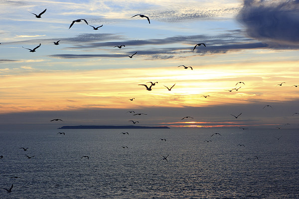 Seagulls against the Sunset Canvas Print by David Morton