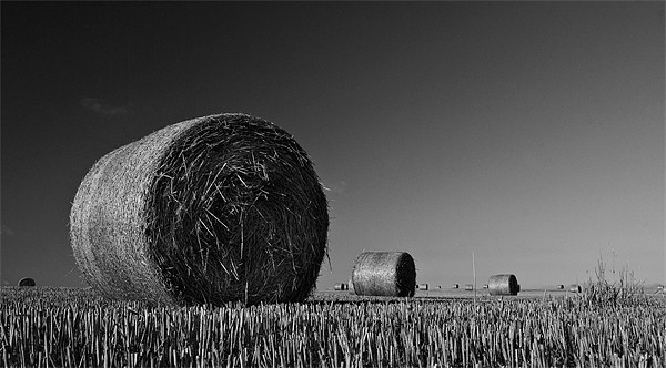 Straw Bales Framed Mounted Print by Mark Robson