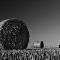 Buy canvas prints of Straw Bales by Mark Robson