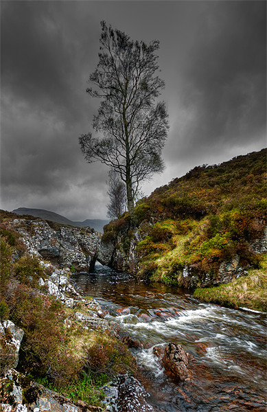 Lonely Tree Print by Mark Robson