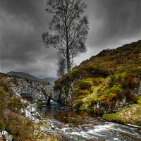 Buy canvas prints of Lonely Tree by Mark Robson