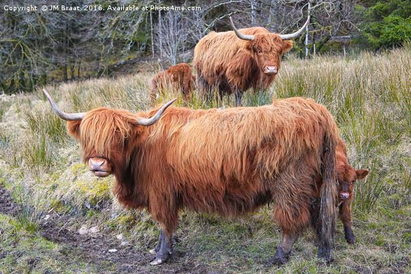 Highland Cattle Canvas print by JM Braat