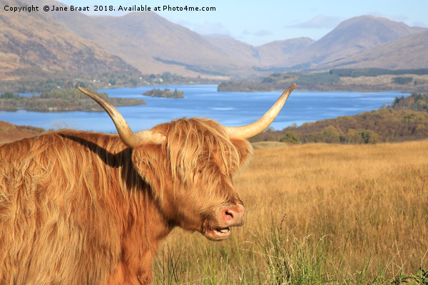 Highland Coo at Loch Awe Canvas print by Jane Braat