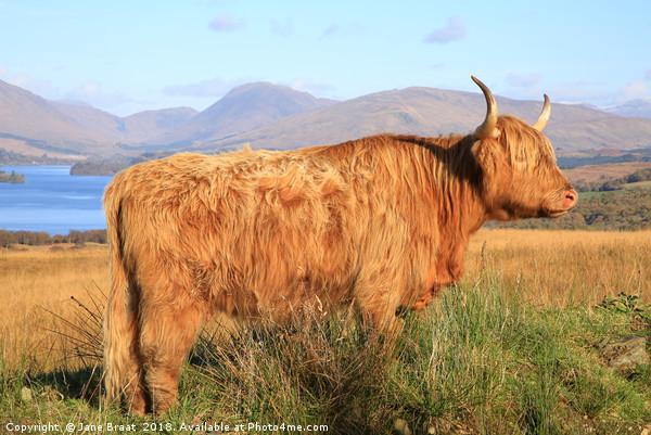 Highland Cow, Loch Awe Canvas print by Jane Braat