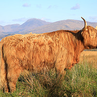 Buy canvas prints of Highland Cow, Loch Awe by Jane Braat
