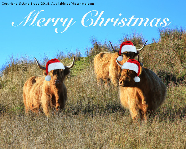 Cladich Highland Cows Christmas Canvas print by Jane Braat