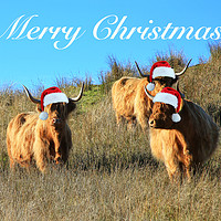 Buy canvas prints of Cladich Highland Cows Christmas by Jane Braat