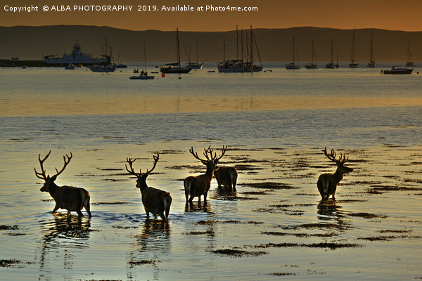 Lochranza, Isle of Arran, Scotland Framed Print by ALBA PHOTOGRAPHY