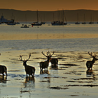 Buy canvas prints of Lochranza, Isle of Arran, Scotland by ALBA PHOTOGRAPHY