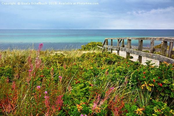 Late Summer on the Baltic Sea Canvas Print by Gisela Scheffbuch