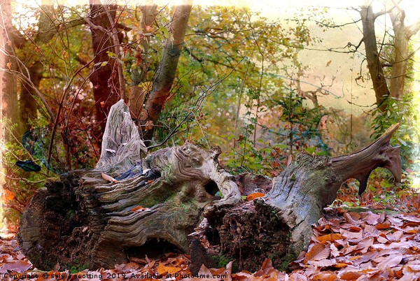 Autumn  Canvas print by sylvia scotting