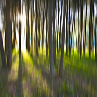 Buy canvas prints of Trees by Sheila  Smart