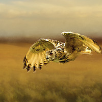 Buy canvas prints of Eagle Owl by Robert Murray