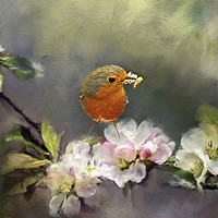 Buy canvas prints of Robin Gathering Food by Robert Murray