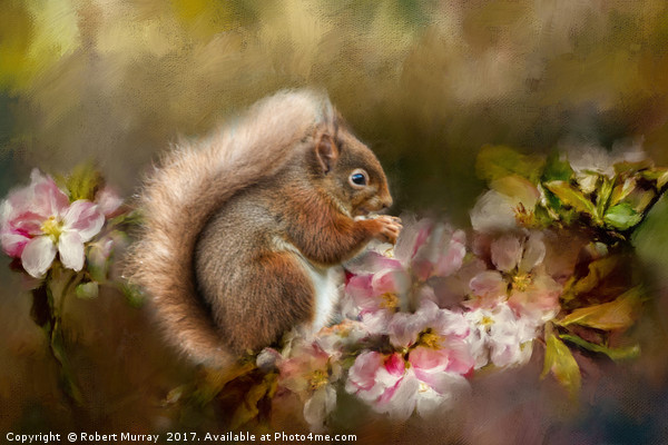 Red Squirrel Canvas print by Robert Murray
