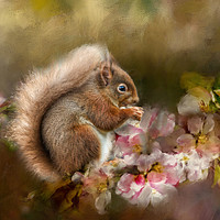 Buy canvas prints of Red Squirrel by Robert Murray