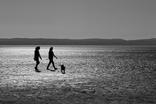 Walking the Dog Print by Andy Heap