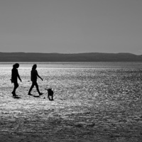 Buy canvas prints of Walking the Dog by Andy Heap