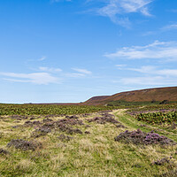 Buy canvas prints of Sheep grazing on the North Yorkshire Moors by Jason Wells