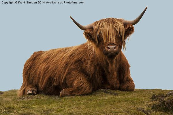 Highland Cow Canvas print by Frank Stretton