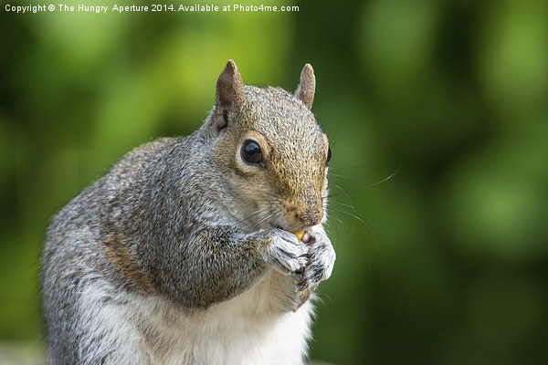 Squirrel Canvas print by The Hungry  Aperture