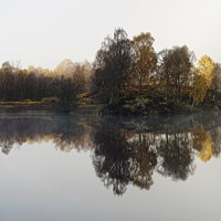 Buy canvas prints of  Trees by Stephen Taylor