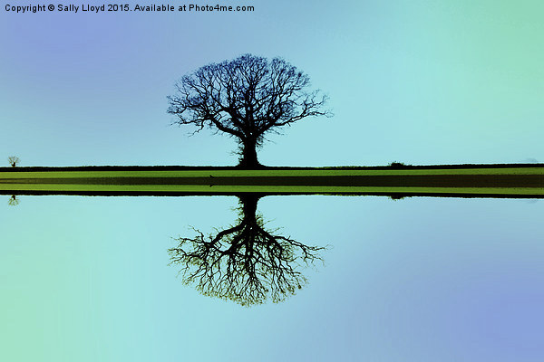 Solitary tree in blue symmetry Framed Mounted Print by Sally Lloyd