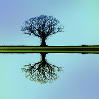 Buy canvas prints of Solitary tree in blue symmetry by Sally Lloyd