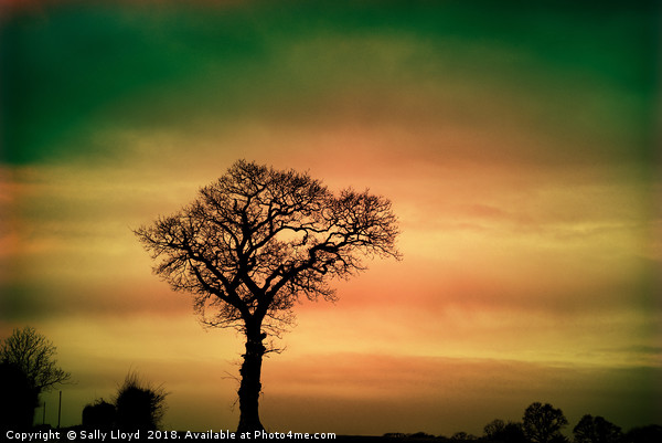 Tree Silhouette against the sky Framed Mounted Print by Sally Lloyd