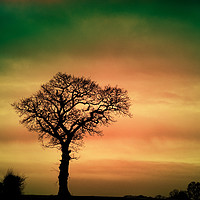 Buy canvas prints of Tree Silhouette against the sky by Sally Lloyd