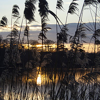 Buy canvas prints of Sunset Broad by Sally Lloyd
