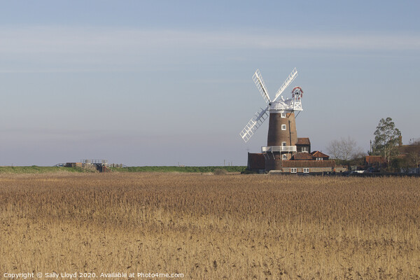 Cley Mill across the cornfields Framed Mounted Print by Sally Lloyd