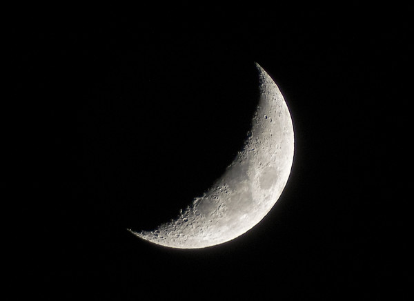 Crescent Moon Canvas print by Tracer Fox