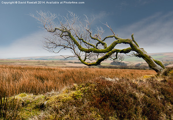 Prevailing Wind Canvas print by David Rowlatt