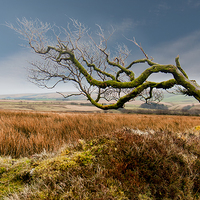 Buy canvas prints of  Prevailing Wind by David Rowlatt