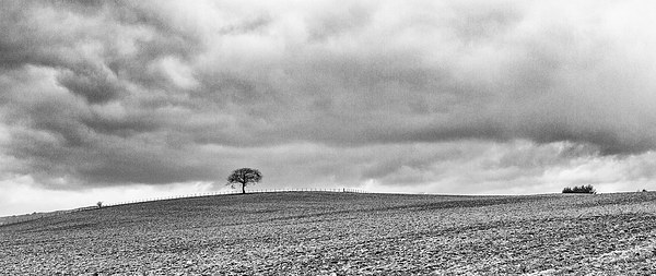 Lone Tree Canvas print by Ian Young