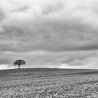 Buy canvas prints of  Lone Tree by Ian Young