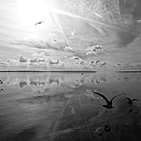 Buy canvas prints of Salt Lagoon B&W by Florin Birjoveanu